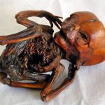 10 Bizarre Things People Did With Corpses
