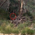 'He felt as though he was being watched': The terrifying moment a man hiking near an Australian suicide spot photographs a GHOST lurking in the bushes – and he claims he has been haunted ever since