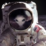 A Second NASA Scientist States 'Somebody Else' Is On The Moon