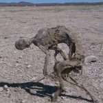 UNIDENTIFIABLE MUMMIFIED BEING FOUND IN NORTHERN MEXICO